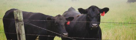 """11.04. - """"Klimagerechtigkeit und Tierhaltung"""" - Vortrag von Animal Climate Action"""