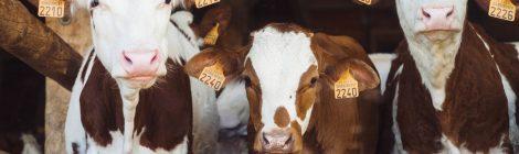 """28.03. - Vortrag: """"Fleischvermarktung - Die Werbestrategien der Tierindustrie"""" mit Friederike Schmitz (Tierfabriken Widerstand)"""
