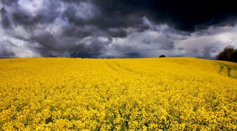 """Aufruf und Einladungstext zur Veranstaltungsreihe """"Hinter dem Tellerrand - kritische Perspektiven auf die globale Agrarindustrie"""